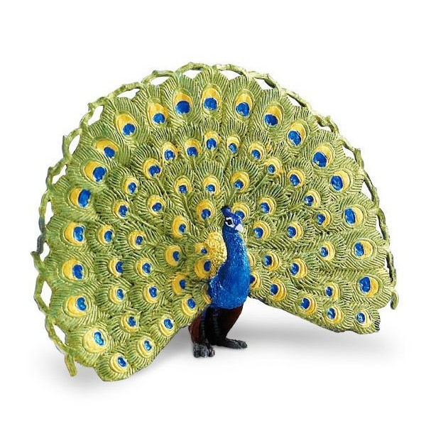 indian-blue-peacock-wings-of-the-world-264629